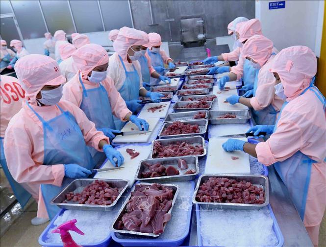 Chế biến cá ngừ đại dương xuất khẩu tại Công ty CP Bá Hải, Phú Yên